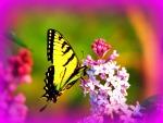 Butterfly on Lilac Bush