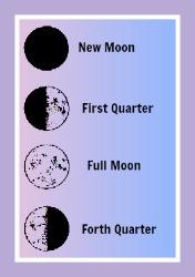 Moon Quarters